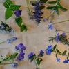 ブルー&パープルの花