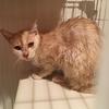 猫にシャンプーをするメリット・デメリット