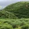 急斜面の赤牛 阿蘇外輪山で