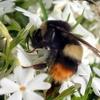【農薬がハチに与える影響】QRコードを用いた自動観察で見えた事実