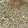 庭の掃除(^^)雑草を抜いたよ。