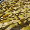 【節約】主婦の時間の生かし方。手作り干し芋はおいしくてコスパがいい。