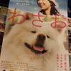 ブサカワ犬『わさお』、鰺ヶ沢駅の観光駅長に。