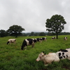 牛さんに会いに大山へ。