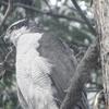 2018年1月22日 雪の日の鳥