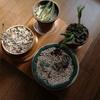 豆とレタスと家事と日蝕