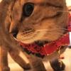 100均グッズで猫の首輪とけりぐるみを作ってみました