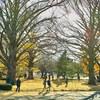 秋の新宿御苑を歩いたので写真をアップ