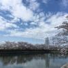 泉佐野 桜は見頃ですよー!(4月5日時点)