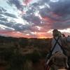 【オーストラリア】エアーズロックをラクダに乗って観光した