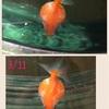 ぷりちゃんの水泡⑩