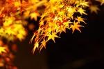 秋の京都で癒される。縁側に座ってゆったり紅葉を楽しめるスポット8選