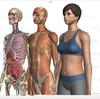 【ZygoteBody】360度ぐるぐる見れる! 3D人体標本 ジゴーテ・ボディ
