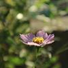 螺旋に咲くねじり花と。