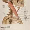 胸鎖乳突筋の緩め方