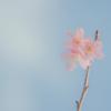 【新元号発表の日】ほっこり。月曜日に贈る言葉。(4月1日)