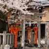 祇園白川の桜2021。見頃や開花状況。