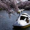 桜舞う井の頭公園と久しぶりのリコーフレックス