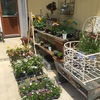 お花の苗追加と新商品の紹介