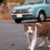 うちの車にはなぜか猫が寄ってくるんです