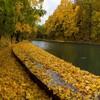 ロシアの金の秋