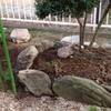今年一番の寒さにも負けず、和室前の庭の続きをしました