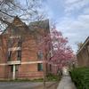 プリンストン大学の新型コロナウィルス対策、そして・・・
