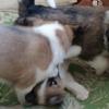 パピー保護犬とリラ