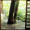 【京都】知る人ぞ知る嵐山の桃源郷、「祐斎亭」で「夢こうろ染」に触れる
