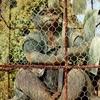 新日吉神社の猿。ご利益は、開運招福。