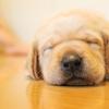 人や動物が寝なければならない理由/変な夢を見る理由
