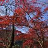 【アラ還さんぽ】生田緑地の紅葉をお届けします。