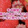 冬の味覚! 栃木県小山市の「いちごの里」で スカイベリーいちご狩りに行ってきました!