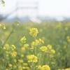 菜の花 × OLYMPUS PEN3人娘。