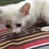 子猫をお迎えしました♬