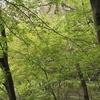 諏訪山公園〜再度公園〜市ケ原〜布引滝を歩く(リハビリ歩き5回目)