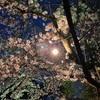 桜まつりがあるのがやっぱり嬉しい!なお話です
