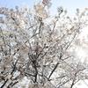 Snapshot ~『桜 2021』 #14