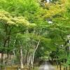 嵐山からちょっと足を延ばして鹿王院へ。もみじの参道が美しい寺院です。(Kyoto, rokuoin)