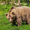 どうやらクマは冬眠中に出産するらしい。