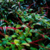 雨上がりの森の音 鈴の音奏でる赤い花