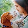 『犬生』繋いで君を守る!「僕のワンダフル・ジャーニー」で、やっぱり泣いた…。