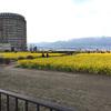 【写真修復の専門店】パノラマ合成&人物の消去 滋賀県守山市なぎさ公園の菜の花