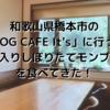 和歌山県橋本市の「LOG CAFE It's」に行って【和栗入りしぼりたてモンブラン】を食べてきた!