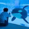 驚くとひとは子供になるもので『名古屋港水族館』