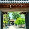 曼陀羅寺公園の藤棚