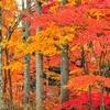 紅葉狩りを英語で説明しよう!使えるオススメ英語フレーズ20選