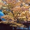 比叡山もみじ祭り もみじ以外の美