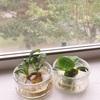 夏休みの記憶と窓際の野菜のその後…