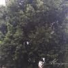 愛知県一宮市 Y様邸 庭木の剪定 伐採なら幸樹にお任せください!